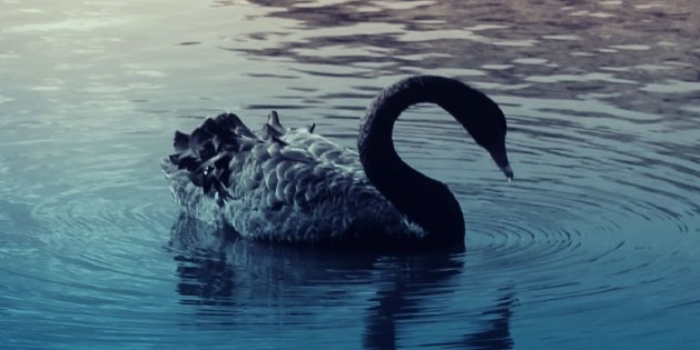 The theory of black swans applied to internet, preventing effect
