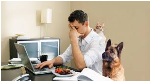 Pros and Cons of Home Working2